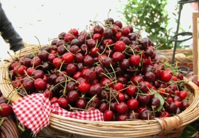 Pubblicato in Gazzetta il disciplinare della ciliegia IGP di Bracigliano