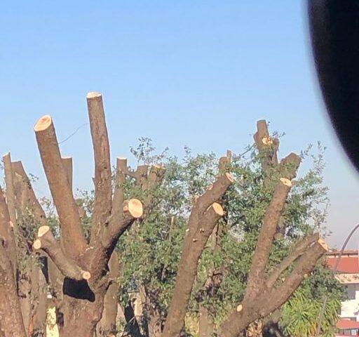 """Taglio dei lecci nel Parco urbano di San Marzano sul Sarno, la denuncia di """"Noi sempre tra voi"""": """"Operazione scellerata"""""""