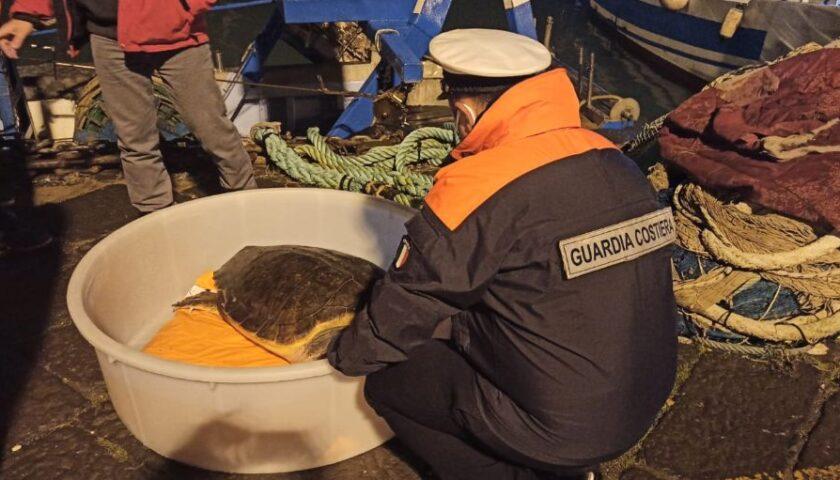 A Salerno salvata tartaruga Caretta Caretta impigliata in reti da pesca