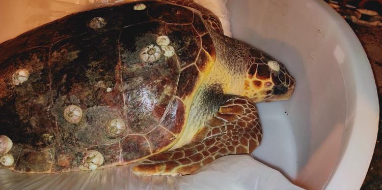 Pescatori salernitani salvano tartaruga Caretta-caretta