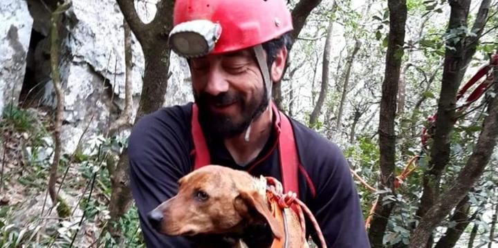 A Morigerati cane finisce in un dirupo e viene salvato