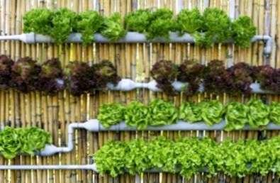 Micro giardinaggio, la nuova passione dei giovani per riconnettersi alla natura
