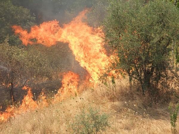 Provocò incendio boschivo ad agosto, arrestato piromane di Giungano