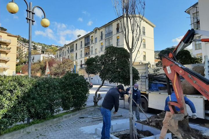 Salerno, Torrione si fa più verde con 16 nuovi alberi