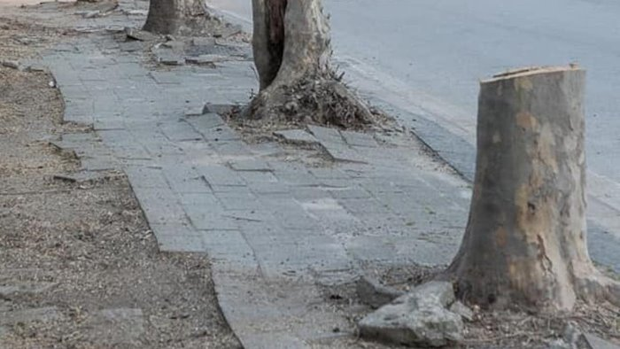 """Salerno, alberi abbattuti. Europa Verde: """"Continuiamo la nostra battaglia"""""""