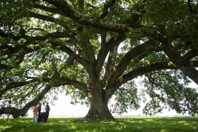 Fare Ambiente promuove la festa dell'albero e della Primavera