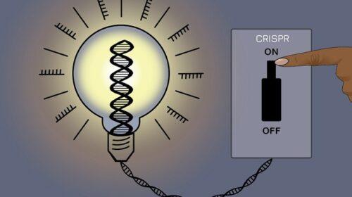 Nuova Crispr reversibile, regola i geni senza alterare il Dna
