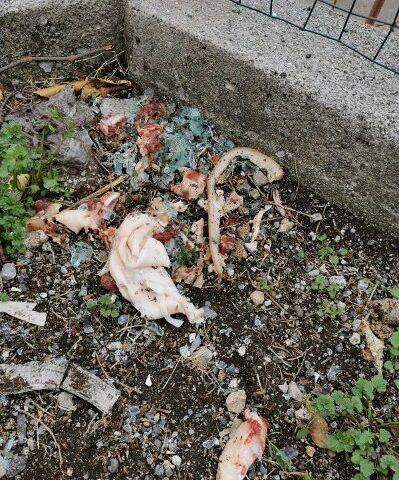 A Corbara strage di cani e gatti avvelenati, l'ira del sindaco Pentangelo