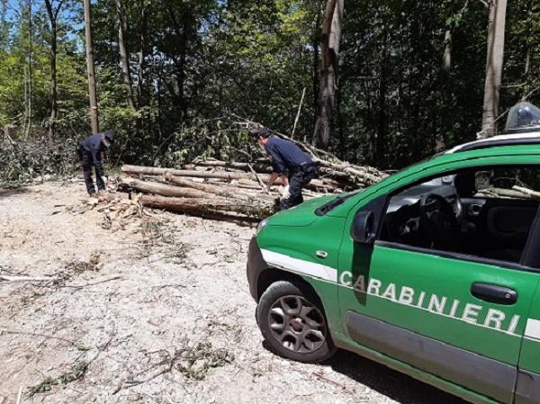 Taglio abusivo di legna, sequestro e denuncia