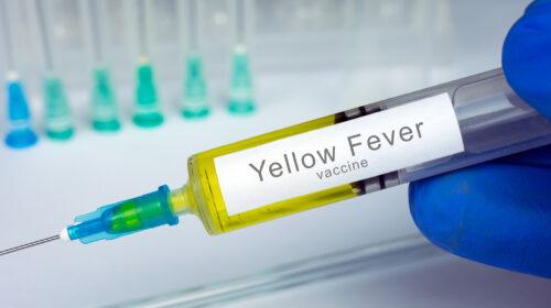 Il 28 aprile del 1932 l'annuncio del vaccino contro la febbre gialla