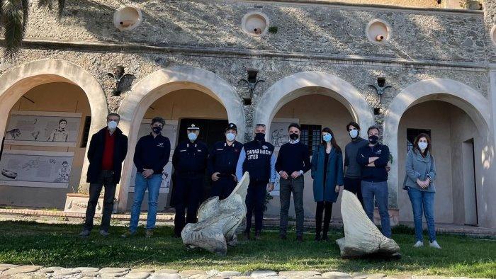 In esposizione i resti del grande cetacei ritrovato a Pollica
