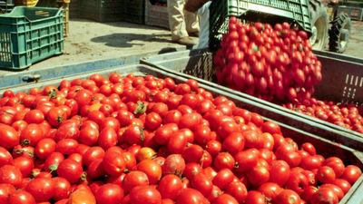 Falso pomodoro made in Italy, sequestro in Toscana al gruppo Petti