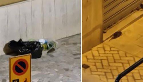 "La Lega: ""Topi in via Calenda e via De caro, intervenga Salerno Pulita"""