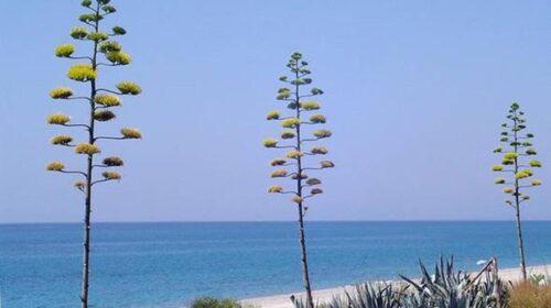 Bandiere blu, svettano Liguria e Campania