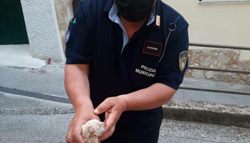 """Giffoni Sei Casali, cuccioli di cane nel sacchetto di plastica: uno è morto. Il Comune: """"Vergogna"""""""