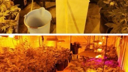 Coltivava 110 piante di droga a Pagani, arrestato 47enne nocerino