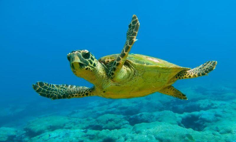 A Camerota tartaruga intrappolata nella rete a mare, salvata da un pescatore