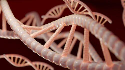 Effetto colesterolo su rischio cuore dipende anche dai geni