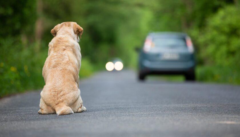 """""""Io credevo in te"""", cortometraggio contro l'abbandono dei cani"""