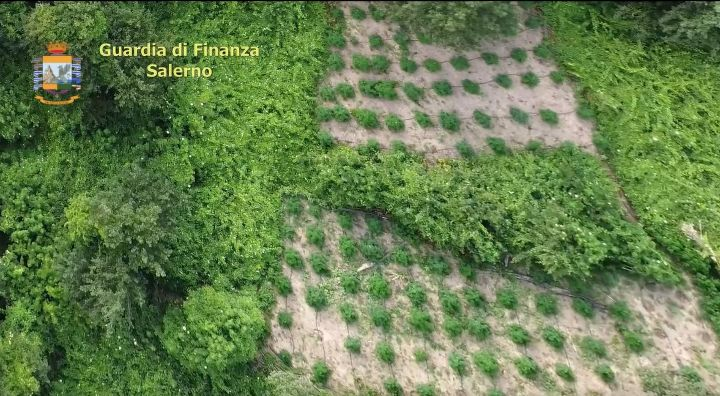 Blitz a Serre, sequestrate 470 piante di cannabis per oltre 400mila euro di guadagno: 3 arresti