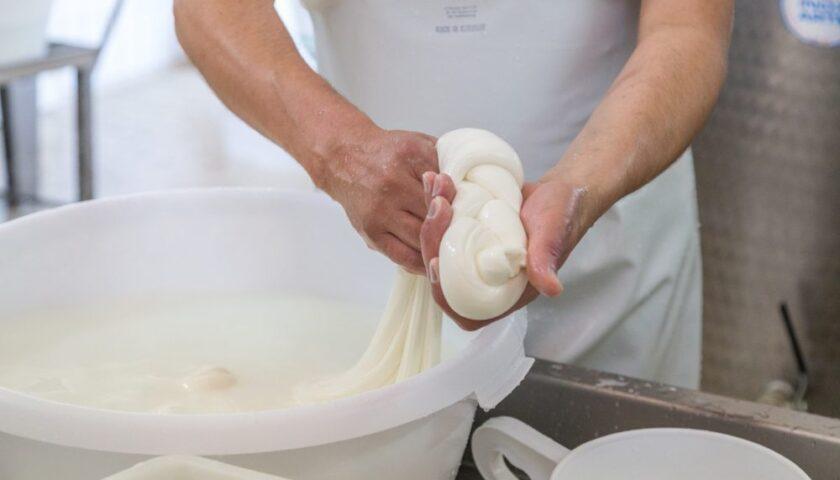 """Lavorazione della mozzarella: studenti """"Virtuoso"""" ospiti del caseificio biologico Unica"""
