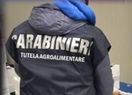 Pomodoro egiziano venduto per italiano, sequestro per un milione di euro nell'Agro nocerino