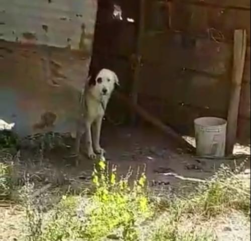 """Gli animalisti: """"Cani nei Picentini abbandonati al proprio destino"""""""