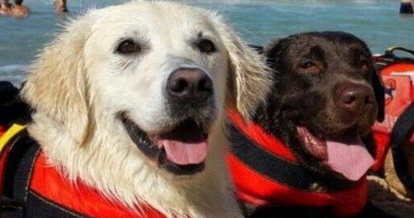 Trascinata al largo dalla corrente, 15ene salvata a Palinuro dai cani bagnino