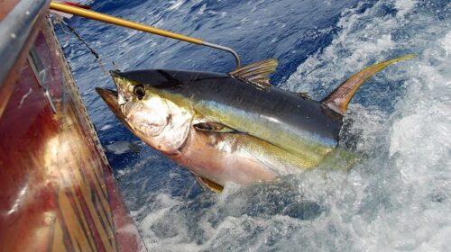 """Pesca del tonno, Confcooperative: """"È la fine per la flotta salernitana"""""""