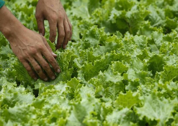 Pac: agricoltura 4.0, arriva piattaforma taglia-burocrazia