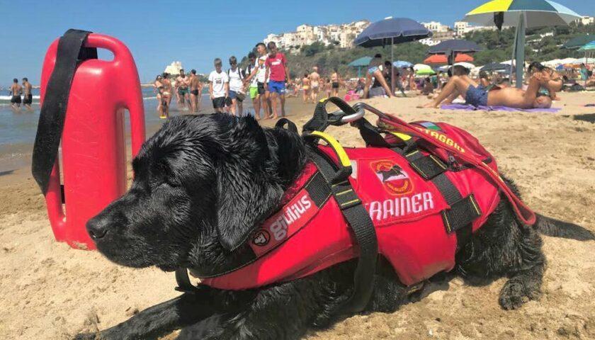 Cani bagnino salvano 14 persone tra cui 8 bambini in mare a Sperlonga