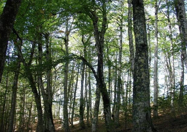 Unesco: 8mila ettari foreste italiane patrimonio umanità