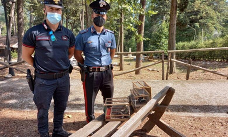Ad Auletta sorpreso un bracconiere e sequestrati i mezzi di caccia illegali