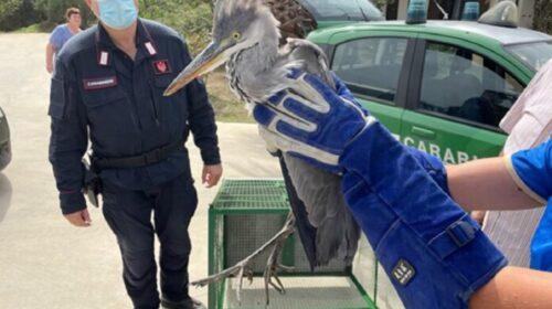 I carabinieri forestali salvano Airone a San Cipriano Picentino
