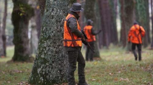 Uccidono un cinghiale, cacciatori sanzionati