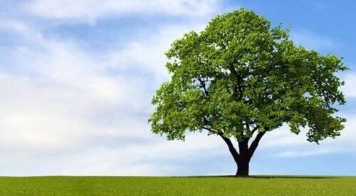 Salerno, gli studenti del liceo Tasso al Rettore: piantare un albero nei giardini dell'Università